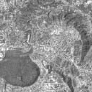 06_616_analisi-studio-indagini-e-monitoraggio-naturalistico-del-sic-delle-collina-dei-camaldoli