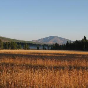 Yellowstone - F.Bulgarini